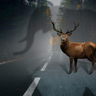 """Kampagne zur Verkehrssicherheit """"Tiere kennen keine Verkehrsregeln"""""""